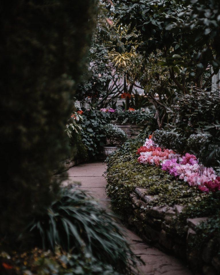 Łatwe w uprawie kwiaty do ogrodu